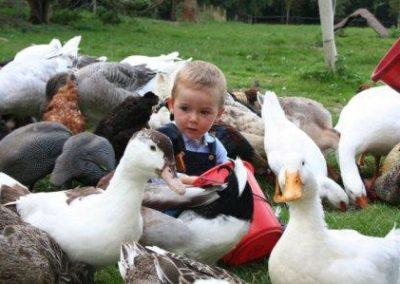 canards-enfant-ferme-pédagogique-canon
