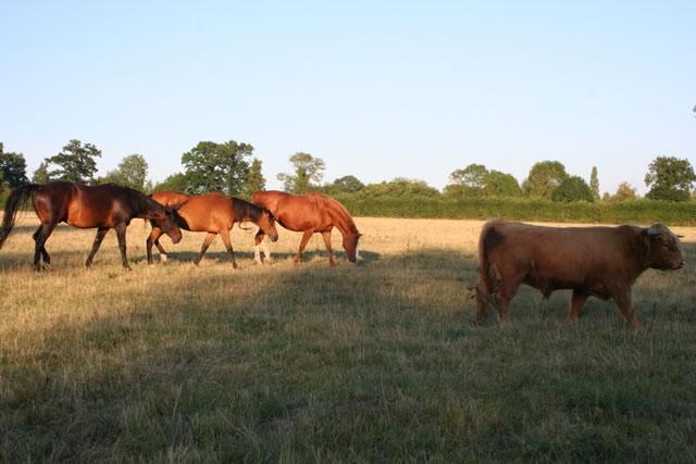 chevaux-et-vaches-ferme-pedagogique-canon