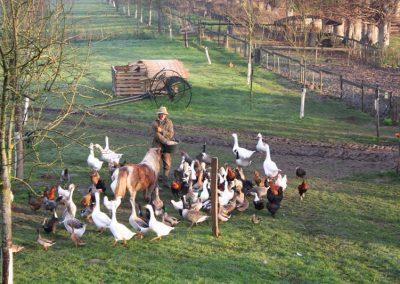 nourrir-les-canards-ferme-pédagogique-canon