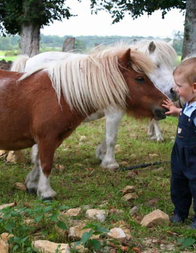 poney-enfant-ferme-pedagogique-canon