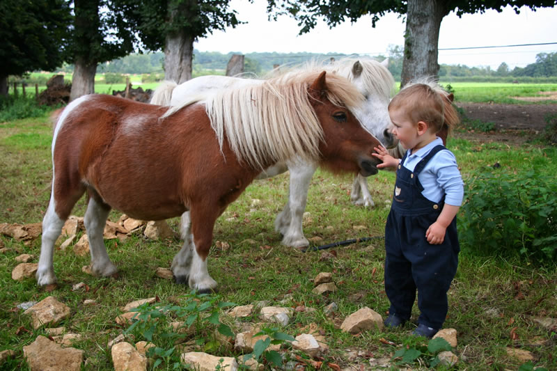 En 2017, vous pourrez venir caresser nos nouveaux poneys !