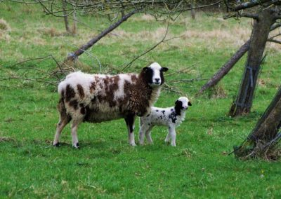 mouton beige 2 - Sandra Bricet Boliade Mulan