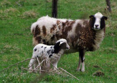 mouton beige - Sandra Bricet Boliade Mulan